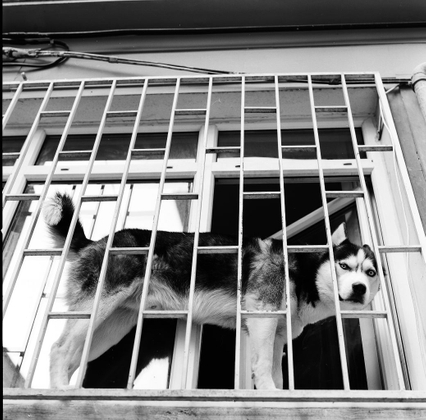 A Wolf © Gigi Roccati