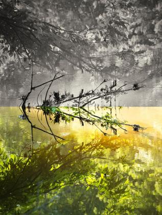Awakening© Carolyn Meltzer