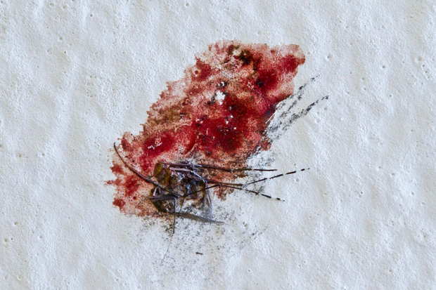 Blood ties: relationships between mosquitoes and humans (Photographic series)
