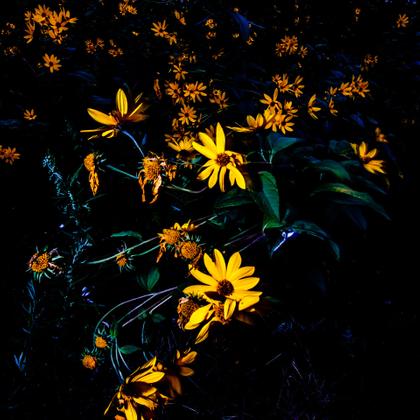 Autumn flowers #1