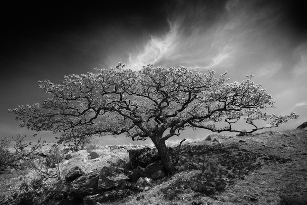 Black-a-tor Copse, Dartmoor, Devon