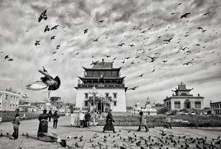 Pigeons come into land at Gandantegchinlen Monastery in Ulanbator, Mongolia