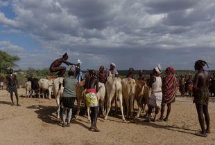 Bull Jumping Ceremony, Hammer Tribe, Ethiopia (1)
