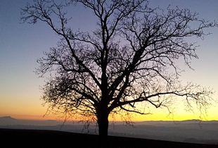 La solitude de l'arbre sans feuilles