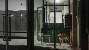 The Watchdog.