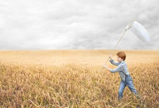 Boy in the cornfield