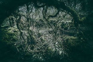 The Forest of Broceliande