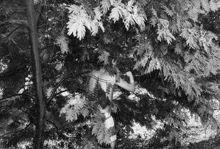 la Acacia Negra