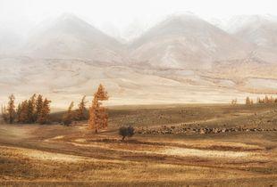 Altai pastoral
