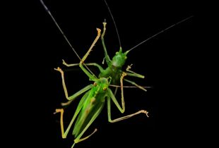 PRAYING MANTIS-REFLECTION