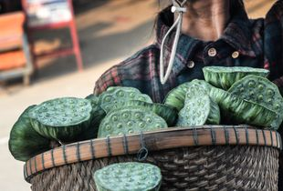 Lotus Vendor