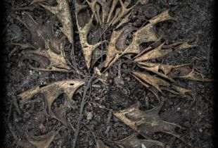 Fallen branches 4