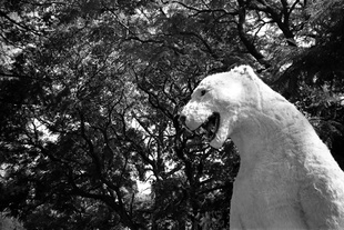 A fake polar bear as tourist attraction in front of the Bosque de Chapultepec (Mexico DF), December 2012