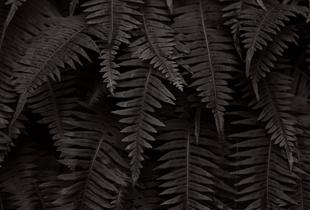 Nature's Fabric