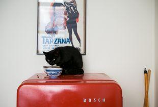 Tarzana Wild Sex & Black Cat - Brussels 2014.
