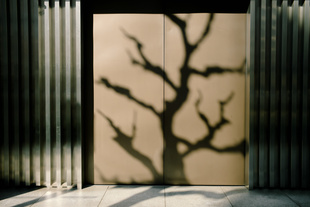 Natural Nature. © Mankichi Shinshi. Chosen for the LensCulture Street Photography Awards Top 100.