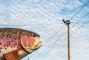 "Rainbow Trout. From the series ""The Gulf."""