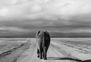 Back to Kenya