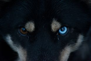 Close look into the eyes