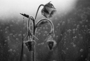 Rare Flower