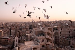 Shatila, Lebanon, April 2017. Pigeons fly over the roofs of the provisionally erected houses, which are now up to 10 storeys high.