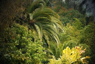 Jungles 01 © Olivia Lavergne