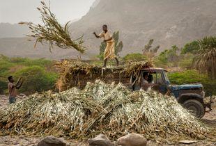 Khamis Benisa'ad Farmers