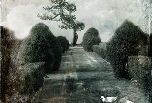 Eden garden