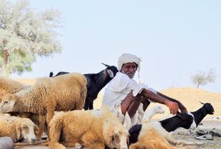 Goatherd with flock