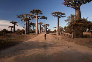 Baobabs Avenue