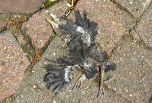 """I saw a dead bird flying through a broken sky…"""