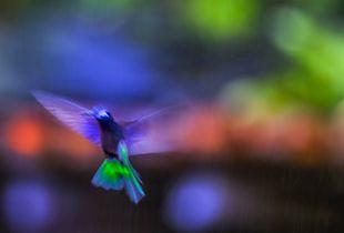 Soul flight 1