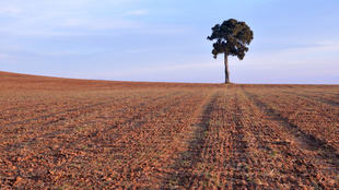Arrogant tree