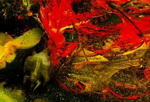 The last turtle 50 x70 cms© Juan Calle