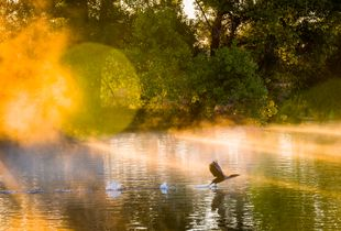 Dawn Patrol in Sepulveda Basin Wildlife Reserve