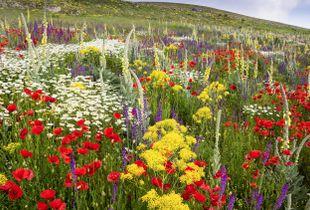 A fallow field in the Abruzzo, Italy