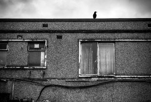A crow on top of a Newsagents in Sheffield.