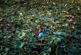 THE LOTUS PICKER