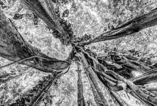 Canto de la Selva