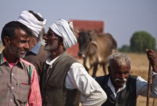 cattle traders, Bateshwar, India