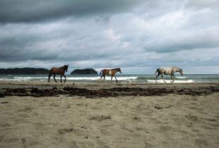 Horses' tales