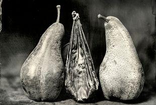Bear Gallbladder with Bosc Pears