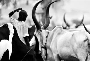 © Michael Freeman A Dinka cattle camp near Rumbek