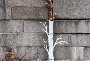 urban nature (I)