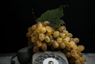 Grapes (6000 B.C.) and Telephone (1970's)