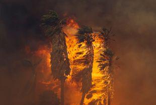 Thomas Fire - Faria Beach