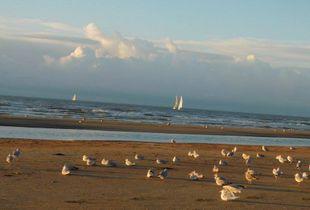 evening sun for birds