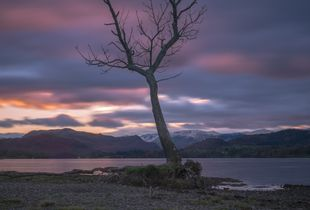 Lone tree- Gale Bay. The Lake District UK