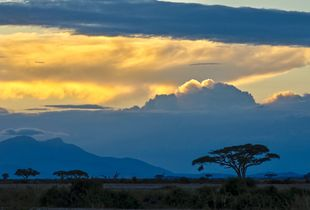 Twilight in Amboseli