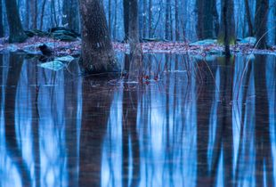Twilight Reflections in Vernal Pool